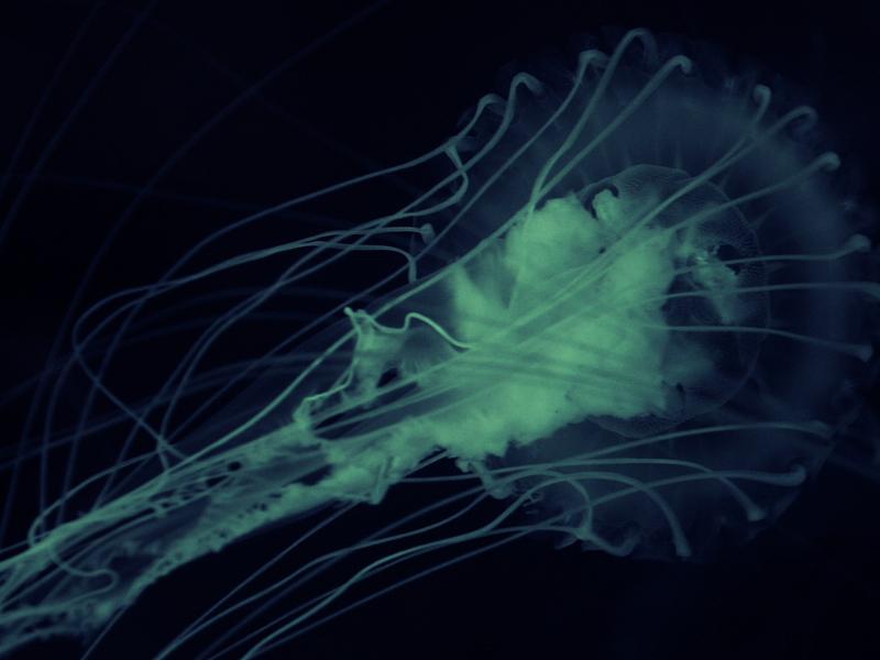 Nuevo caso de la ameba come cerebros en Florida