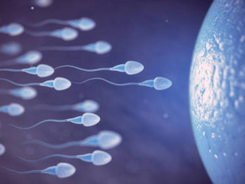 Mucho peso conlleva baja calidad del esperma