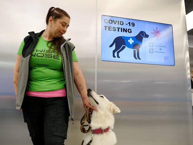 Perros que detectan el Covid-19 al 100%