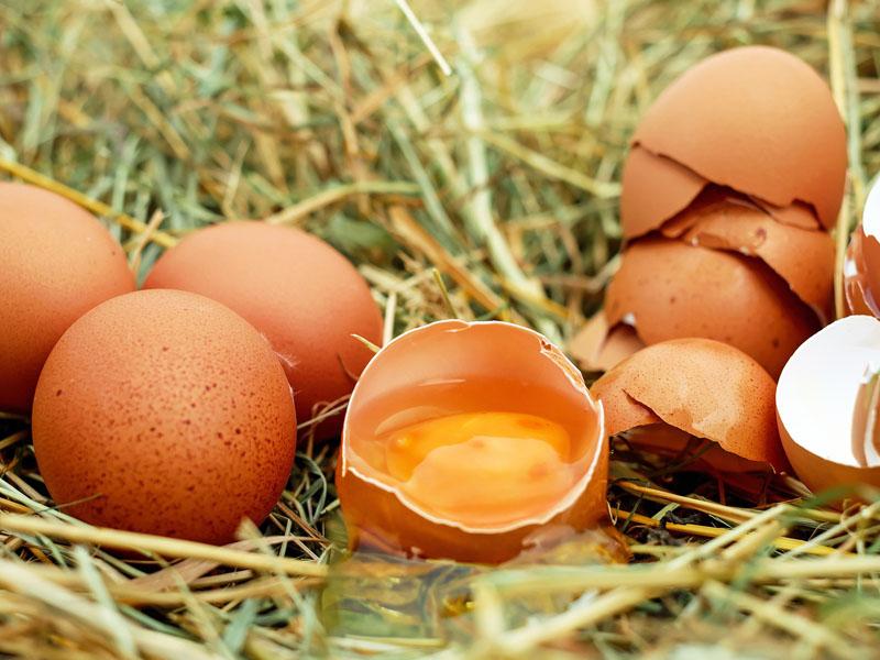Los beneficios del huevo